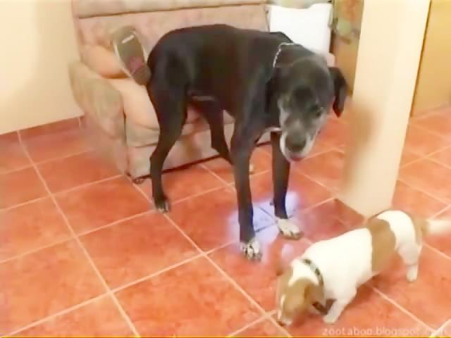 Dog sex alice Kostenlose Hund