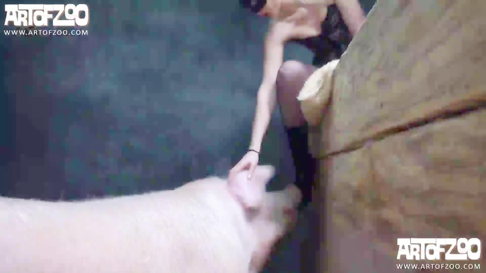 Artofzoo Porno Hd Com zoofilia artofzoo yasmin   free hot nude porn pic gallery